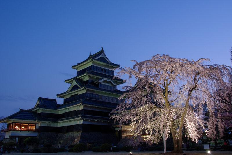松本城 清正公 駒つなぎの桜